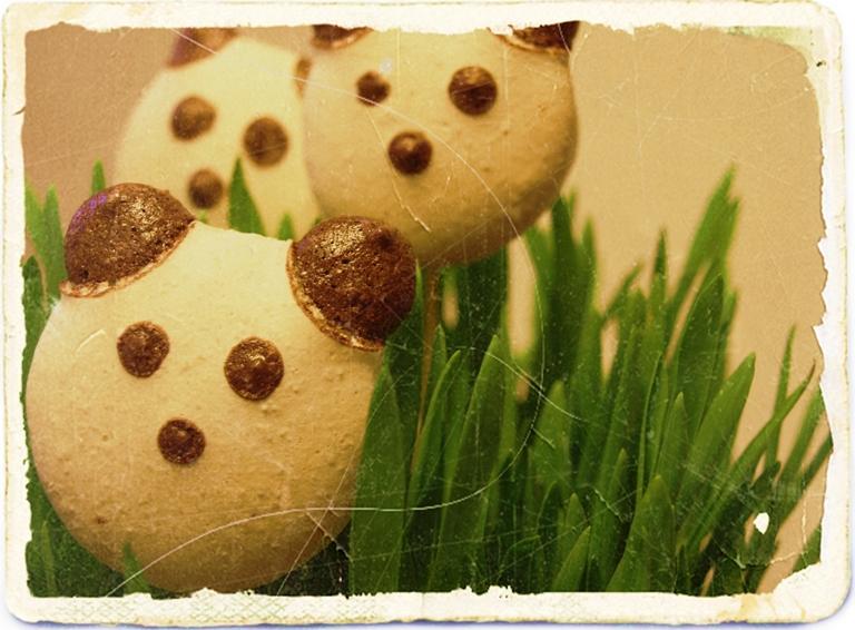 Panda macarons